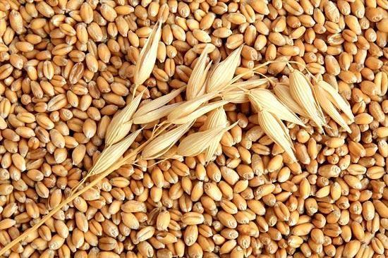 фото зерно пшеницы
