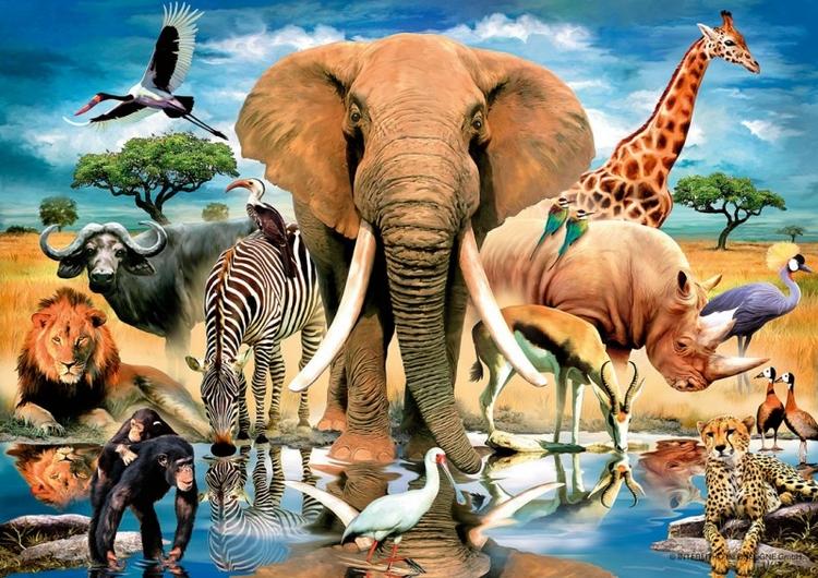картинка животные кушают