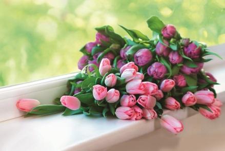 Цветы  фото обои для рабочего стола картинки с цветами